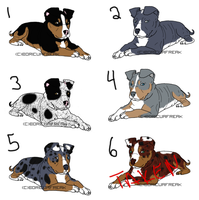 APBT adoptables 2 by BoricuaFreak
