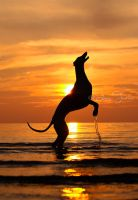 Greyhound in sunset by laura75325