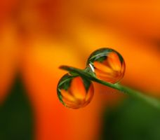 my lovely droplets by sinanTR