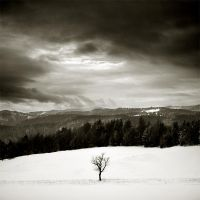 CCXCI. ..Hiver II. by behherit