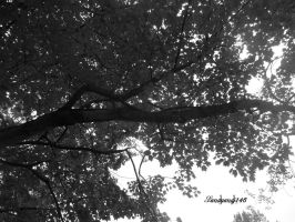 Project 365, Day 150: Silver Leaves by sandyandi146