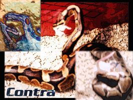 Contra Wallpaper by vireo
