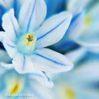 :FORGET ME NOT: by onixa