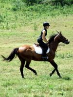 Horse Cantering by equirena
