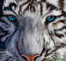 White Tiger with blue Eyes by Neovirah