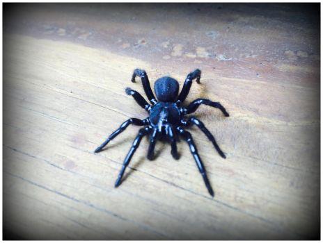Scary Spider by WVUARTIST