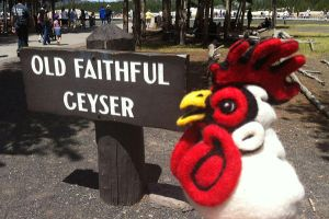 Felted Chicken Head in Yellowstone by AlwaysSuagarCoated