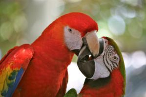 Parrot love by PatriciaVazquez
