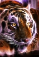 Tiger of light by Orsus