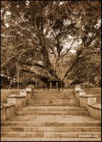 Banyan tree by farcry77