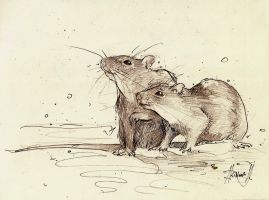 RATS_sketch by Kinovich