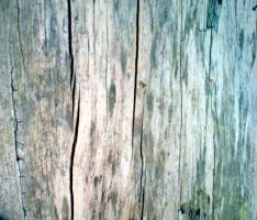 Stock Texture - Woodgrain by rockgem