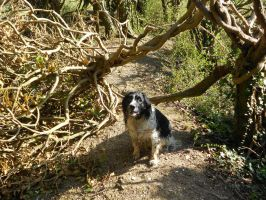 Raggy on the blocked path by Kayleigh-Kaz