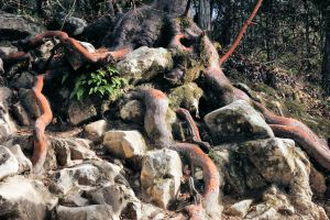 Rocky Roots by digitalpix4all