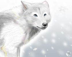 white wolf by adiAdii