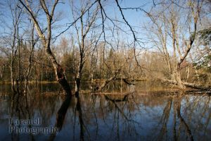 Racquette River Hike VIII by semi234-part2