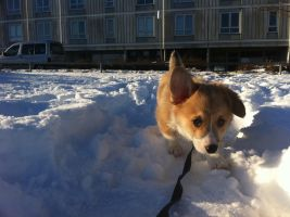 Puppy in the snow by iJonesy