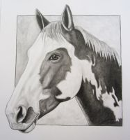 Horse Drawing by allonsy101
