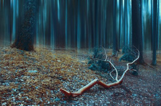 Shadow forest by HendrikMandla