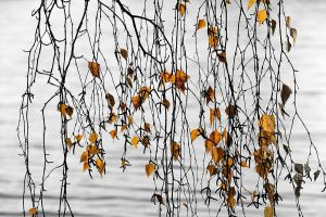 Branches over sea by eswendel