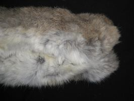 Rabbit Fur 19 by TRANS4MATICA