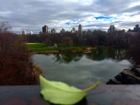 Central park the great lawn by LittleXevy