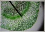 Green Microscope Slide by Kida-Ookami