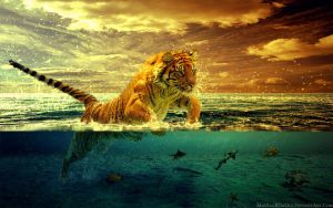 The Tiger by mossaabdaoui