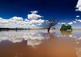 The Tree that Couldn't Swim by hougaard