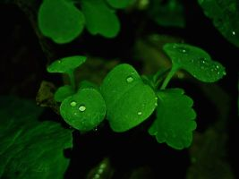 Drops by MiaLeePhotography