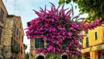 Flower splendour in Sirmione on Lake Garda by pingallery