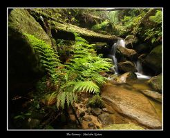 The Fernery by FireflyPhotosAust