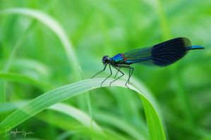 Dragonfly by BogdanEpure