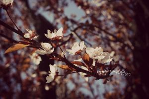 Spring. by Dolceparanoia