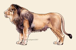 Asiatic lion by LeenZuydgeest