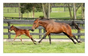 Bar Slide and Foal by Goodbye-kitty975