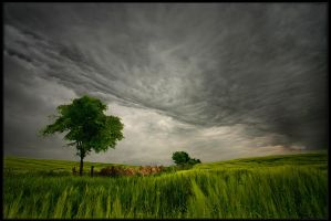 Polish May by Sesjusz