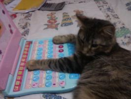 Kitten Using the Computer by L-kaulitz
