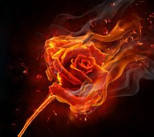 THE BURNING OF THE ROSE by jetlaserman