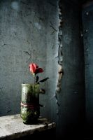 Alone With A Rose by markmarkmark