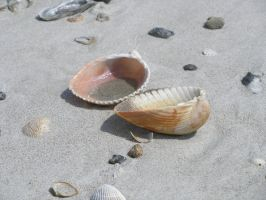 Shells 001 by OverStocked