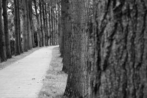 Tree Path by DimitriSergejev