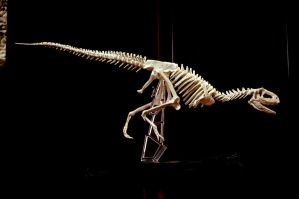 aucasaurus skeleton by hannay1982