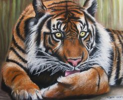 Tiger by tacsitimea