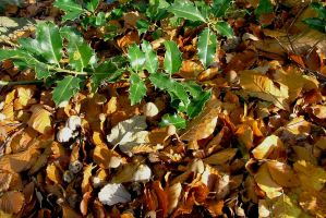 Holly Beech Leaves And Camouflaged 'Shroom Stock by aegiandyad