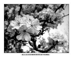 Pear Blossom by kaleidoscopeeyes06