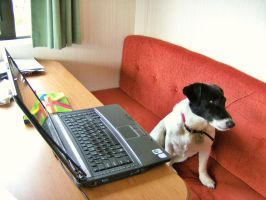 Snoop Has a Go on the Laptop by RoseSparrow