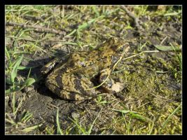 Froggy spring 1 by 99-in-the-shade