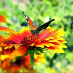 butterfly 2 by Iridescent-happinesS
