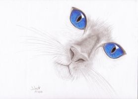 Blue Eyes by jarlis
